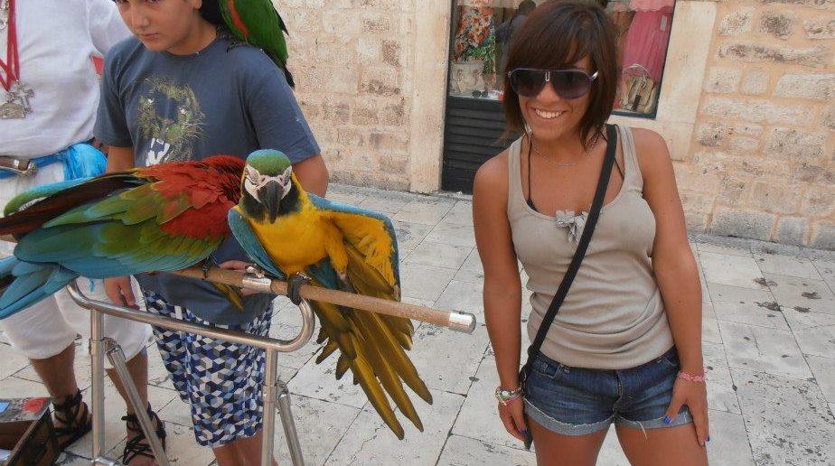 Cosa vedere a Dubrovnik in crociera: Annalisa e i pappagalli